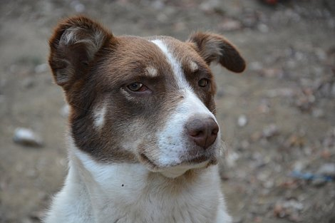 doggy profile 2