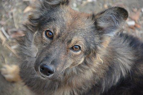 doggy profile 3