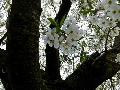 floare 3