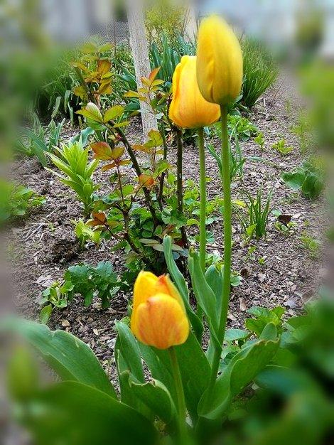 floare 6