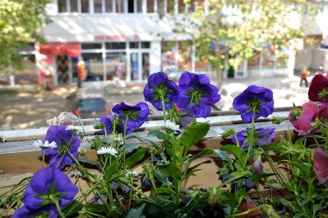 plante de apartament braila