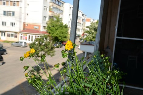 plante de apartament 3