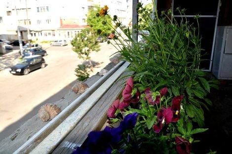 plante de apartament 4