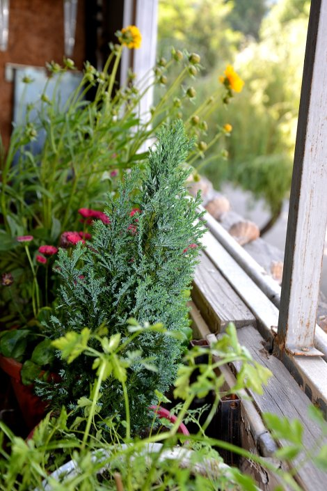 plante de apartament 5