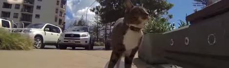 pisica care face trucuri