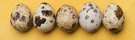 trateaza-te natural cu oua de prepelita